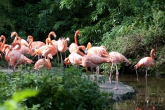02-Flamingos